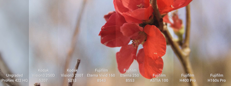 Filmconvert Film Stock Emulation on BMPCC ProRes footage
